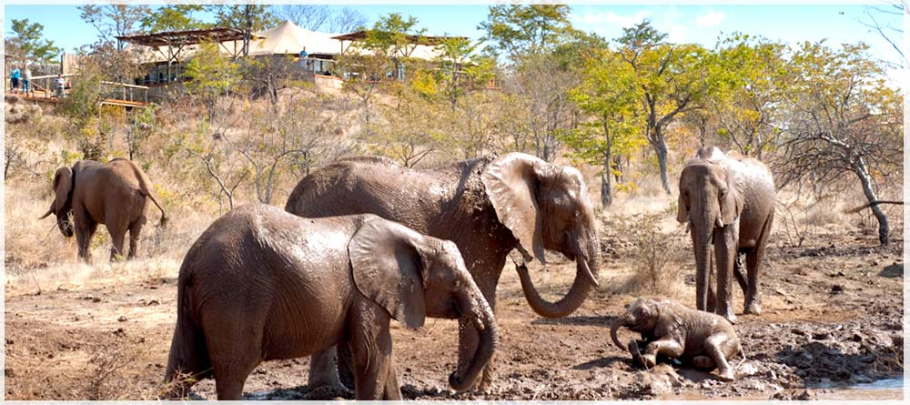 The Elephant Camp Victoria Falls